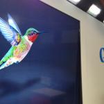 Colibri : petit oiseau ou oiseau de proie de Google ? Impact sur le SEO.